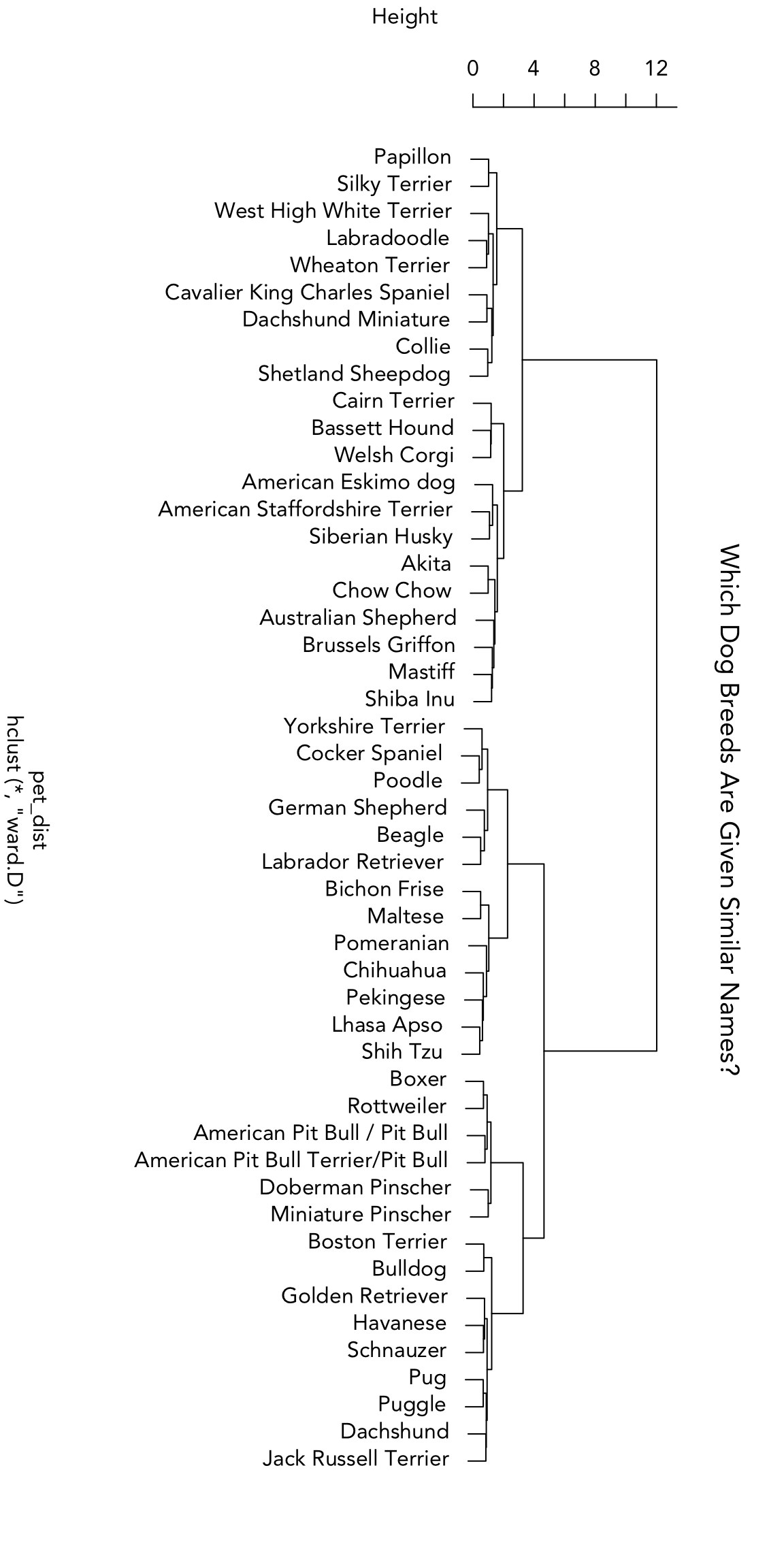 Which Dog Breeds Have Similar Names?